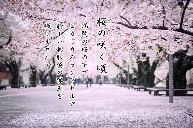 桜の咲く頃の限定の撮影プランのご案内【終了しました】